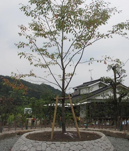 散骨場 「一本桜」.jpg
